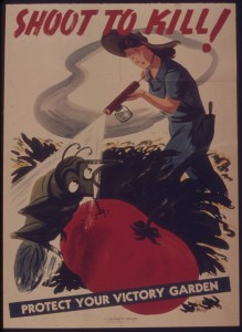 1939-discovery-of-ddt.jpg